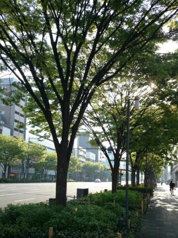 今朝の京都、御池通り   まだ清々しさが漂う