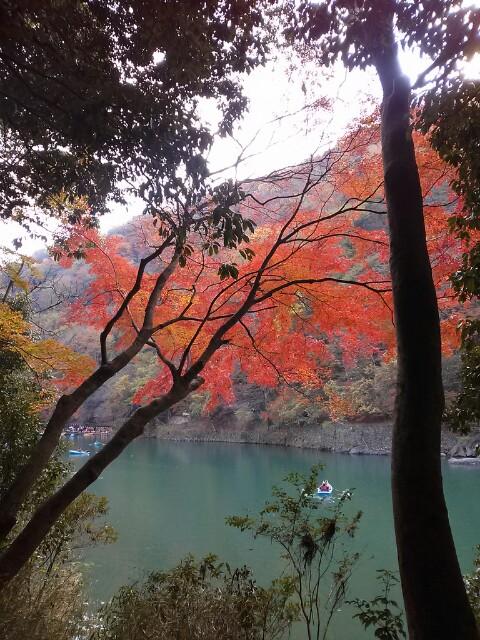 京都、嵯峨嵐山の紅葉。 自分で撮ったと思えない程のベストショット