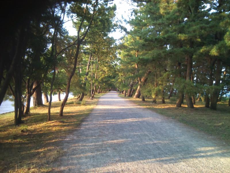 浜辺に挟まれた「天橋立」の松並木を独り占め